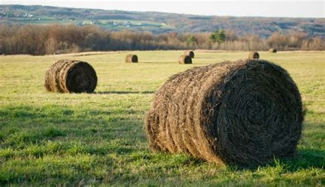 Maine Farm Bureau Statement on Hay and Grazing Dates for